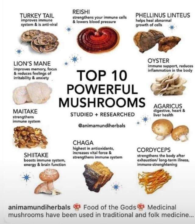 The Power Of Mushrooms
