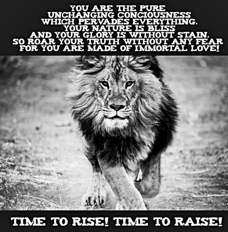 Time to roar!
